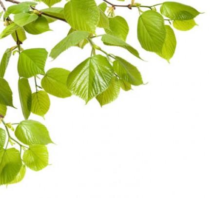 Ast mit grünen Blättern
